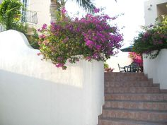 Villas Gardenia in Bucerias from VRBO Vacation Rental Sites, Villas, This Is Us, To Go, Amazing, Plants, Plant, Planting, Planets