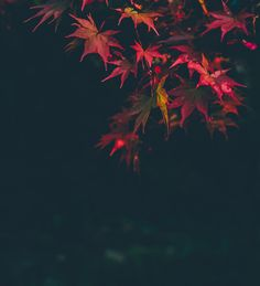 New free stock photo of blur leaves dew - Stock Photo