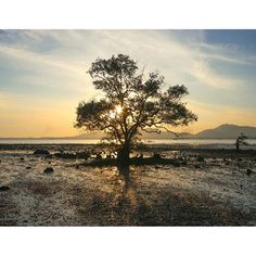 A great shot of the mangrove tree and Big Buddha in the distance - photo courtesy of Instagram and helenreznor