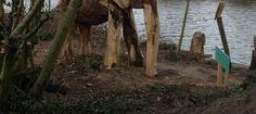 I saw an elephant today
