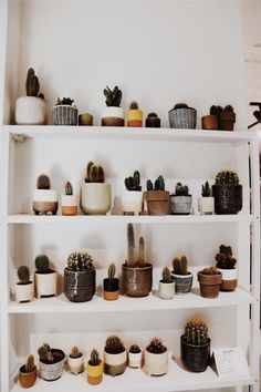 Best Photos cactus plants decoration Tips Succulents and also cactus are the excellent dwelling interior decoration intended for minimalists and also t Deco Cactus, Cactus Decor, Plant Decor, Cactus Art, Cactus House Plants, Vsco, Plants Are Friends, Plant Aesthetic, Room With Plants