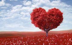 Kuvahaun tulos haulle love