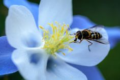 What is Pollination