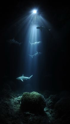 Night dive with sharks