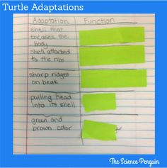 Animals in the Classroom: Observe adaptations and identify the functions! (TEKS 5.10A)