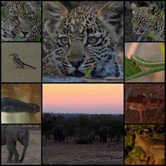 (4) #SafariLive hashtag on Twitter 6-30-16 @heygecko