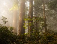 Photograph Rhododendrons and Fog by Daniel Pivnick on 500px