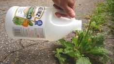If you are looking for a few great weed killers, try my all natural weed killers! These weed killers are healthy for your plants, but not for weeds! Try one today! Garden Weeds, Garden Plants, Garden Tools, Garden Trellis, Outdoor Plants, Vegetable Garden, Outdoor Spaces, Pots D'argile, Clay Pots