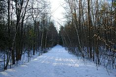 This Ottawa conservation area was created in 1948 when Mr. Pinhey donated the land to the NCC to demonstrate forest conservation practices. The NCC ma...