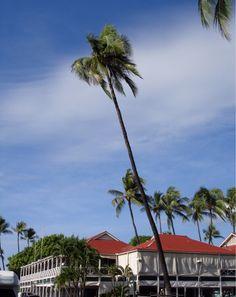 Pioneer Inn Lahaina, Maui Lahaina Maui, Oahu, Places To Travel, Places To See, Lanai Island, West Maui, Never Stop Exploring, Heaven On Earth, Travel Usa
