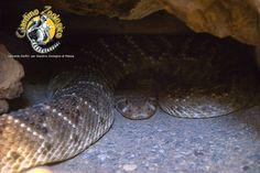#rettile #serpente Giardino Zoologico di Pistoia