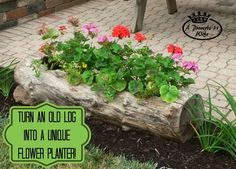 """Making a log planter for flowers on our patio. The log is 1 foot in diameter by 45"""" long. It took me a long time to get it finished because of other project"""