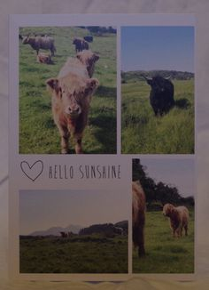 Highland Cattle Blank Greeting Card with by murneilidhkate on Etsy