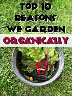 Thinking about going organic in your garden? Here are my top 10 reasons to garden organically! Hint: it's cheaper and healthier!