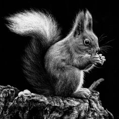 Amazing Expressions in Scratchboard Animals Portraits. Beautiful drawing work by Melissa Helene that conveys the animals' emotions. More information & more images from this Artist, Press the Image. Animal Sketches, Animal Drawings, Black Paper Drawing, Scratchboard Art, Scratch Art, Charcoal Art, Black And White Painting, Wildlife Art, Animal Photography