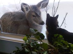 Candi's poor little deer.  Jealous of the cat inside the house on a -30 winter day
