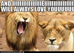 kitty lion tribute