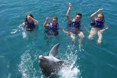Nadando con delfines.