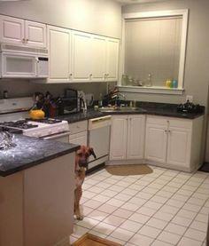 Photobombing dog shows up in every Craigslist photo