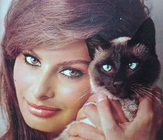"""The photo """"Sophia Loren"""" has been viewed times. Sophia Loren, Celebrities With Cats, Celebs, Crazy Cat Lady, Crazy Cats, Siamese Cats, Cats And Kittens, Italian Actress, Italian Beauty"""