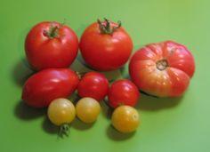 Tomato season is wrapping up and its time to reveal my favorites! They are all new plants that I grew from seed from Botanical Interests. . .
