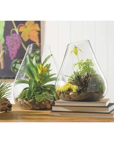 Rustic glass terrariums bring new life to a room. Get it here: http://www.bhg.com/shop/vivaterra-rustic-glass-terrarium-p509771dce4b042c857cb9ed6.html