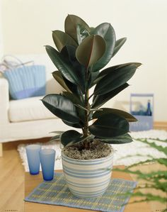 These 10 plants improve the positive energy ( Chi ) at your home, says Feng Shui - Top 10 Plants - NurseryLive Wikipedia
