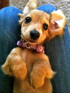 Such a sweet little face!