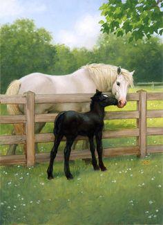 Black Foal saying 'hi' to mama.