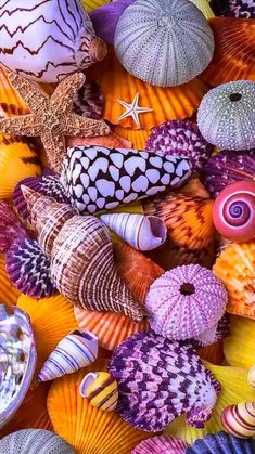 Colours if shells