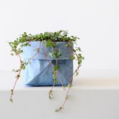 P I L E A 'Silver Sprinkles' An easy way to add colour and texture is by pairing plants with @uashmama_au washable paper bags.