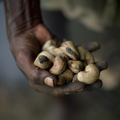 Cashew nuts in hand - India by Eric Lafforgue on Flickr.