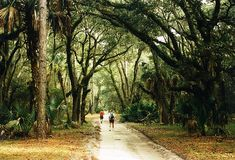 Cumberland Island, Georgia - We've camped there twice. It is a magical place - with wild horses, eagles, armadillos, and no phones, cars, or television.  Bliss