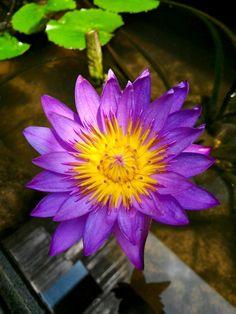 Bloom #bloom