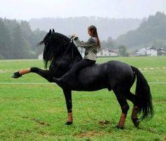 Super black horse