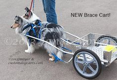 Carts & Harnesses    for Sale: CUSTOM DOG CARTS for Drafting Dog Competition and Recreation by Janet Moyer