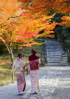 Autumn, the redheaded season of any year ~
