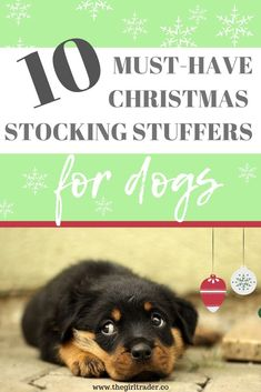 While you are out shopping for Christmas, don't forget about your faithful and loyal family friend! Here are some pretty cool stocking stuffer ideas for your dog to make this his best Christmas ever! Best Stocking Stuffers, Christmas Stocking Stuffers, Christmas Stockings, Christmas Photos, Christmas Fun, Holiday Gift Guide, Holiday Gifts, Cute Surprises, Best Dog Toys