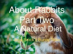 About Rabbits Part 2 ~ A Natural Diet (Feeding Your Pet Rabbit) Rabbit Information, Pet Rabbit, Rabbits, Diet, Natural, Bunnies, Rabbit, Bunny, Banting