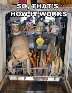 Haha! Tipper does this, except he doesn't get into the dishwasher, probably would if he could though.