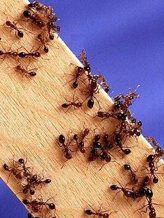 Mouches, mites, fourmis : des solutions naturelles contre les insectes : Avec l'arrivée de l'été, les petites bêtes en tout genre prolifèrent dans les maisons. Voici quelques solutions naturelles pour éviter d'être envahi par les fourmis, les mouches et les mites.