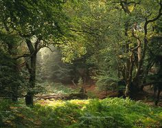 Love the light & shadows: Sunlight in an English Forest