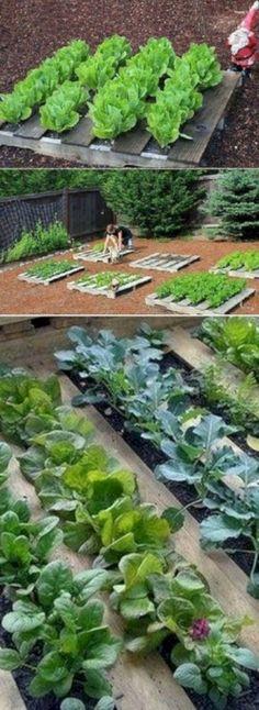 Reuse wooden pallets and make a cute little green garden - garden landscaping Veg Garden, Green Garden, Garden Beds, Vegetable Gardening, Vegetable Ideas, Easy Garden, Gardening For Beginners, Gardening Tips, Pallet Gardening