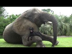 Elephant and Dog   are best friends...Myrtle Beach.  This will make you smile!