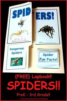 {FREE} Spider Lap Book