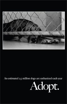 Save a life. Adopt a shelter dog!