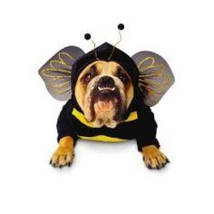 Top 15: Disfraces para perros