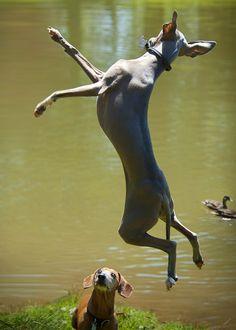 ~Jump~