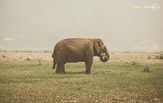 Elephant Nature Park,Thailand 2015 Fran Vargas Photography