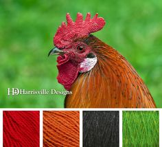 Rooster color palette, Harrisville Designs yarn: Red, Melon, Ebony, and Kiwi.